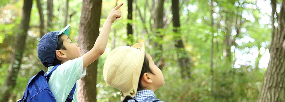 森で指差す子供